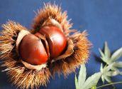 血糖値の上昇を抑える栗の渋皮