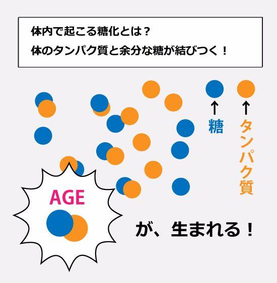 抗糖化AGE